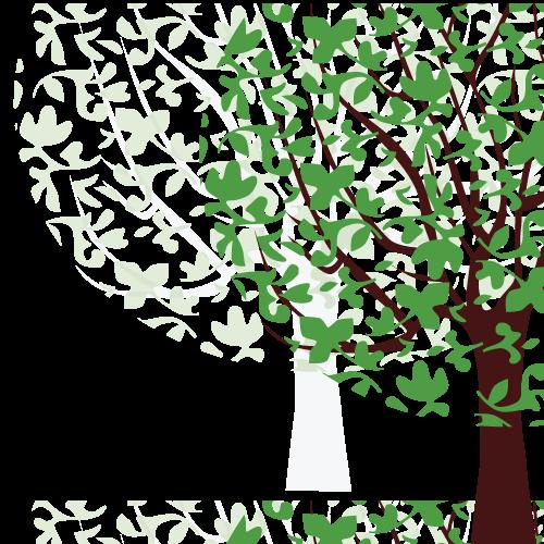 birch-tree-oman